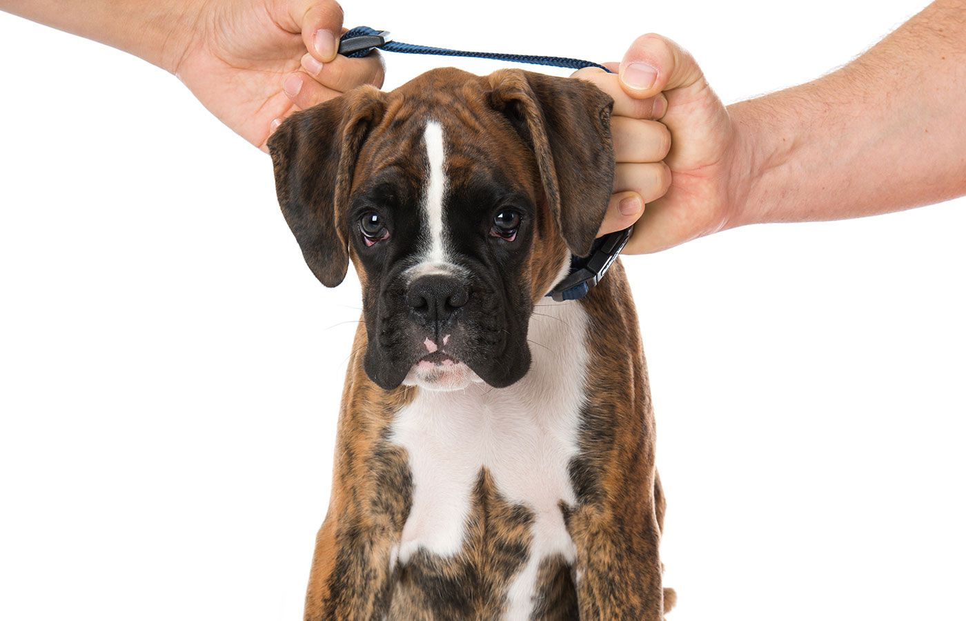 Who Gets Fido? Advice from a Shelton, Westport, Stamford, Milford, and New Haven, Connecticut Divorce Lawyer